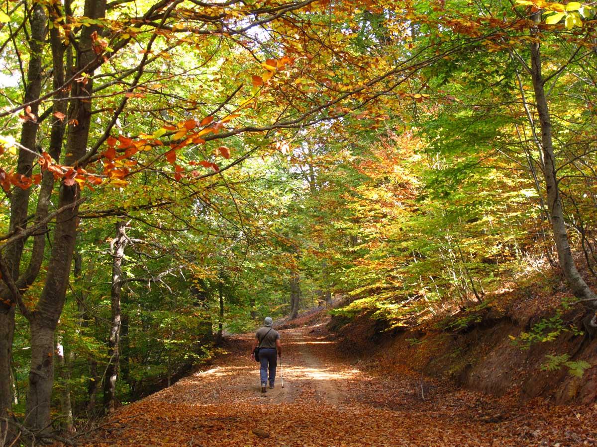 Μαυροβούνι - Κίσσαβος Φθινόπωρο στο δάσος